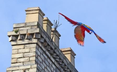 Comp Parrot